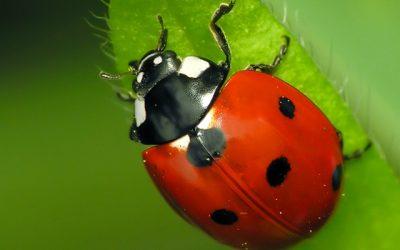 Un día un insecto, me habló