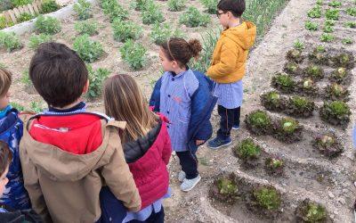 Els alumnes de primer i segon planten bajoques i creïlles en l'hort escolar